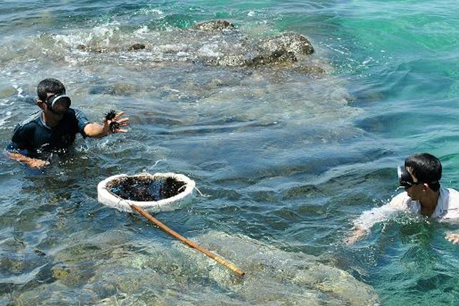 Catching seafoods at Bai Thom - Phu Quoc