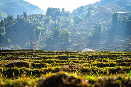Best Hikes in Sapa: A Guide to Trekking Paradise